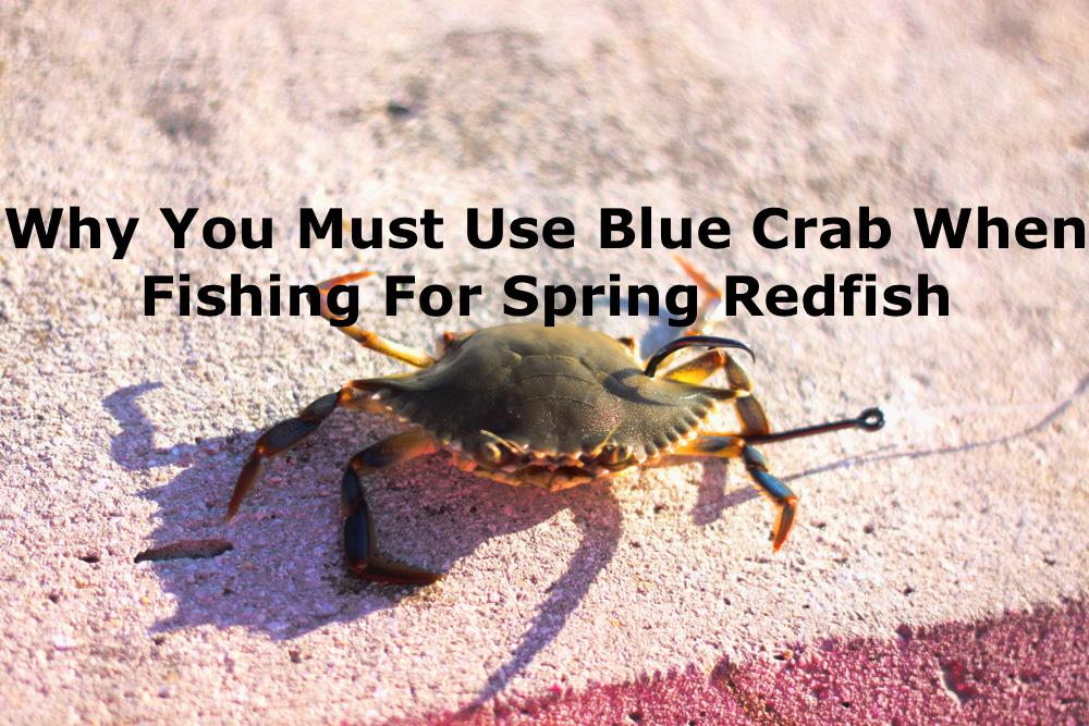 Blue Crabs For Spring Redfish