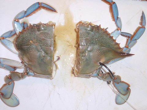 Cutting The Blue Crab In Half