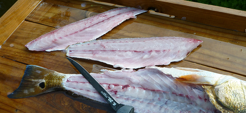 Redfish Fillets (BD Outdoors)