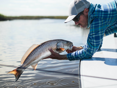 Release of a Redfish While Red Drum Fishing
