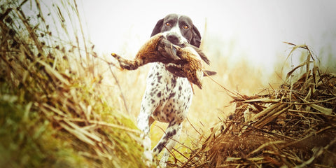 Dog for Waterfowl Hunitng