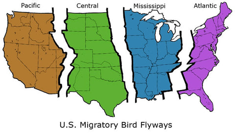 Duck Migration Flyways
