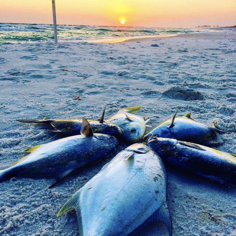 pompano fishing for records