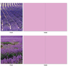 All Occasion Boxed Note Cards - Lavender Fields Forever
