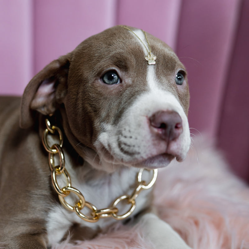 Adopt Don't Shop Paw Charm Necklace JEWELRY The Sis Kiss