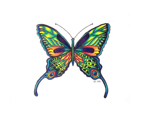 Print of colorful butterfly illustration on white background
