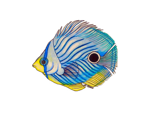 Colorful painting of a single fish on white background