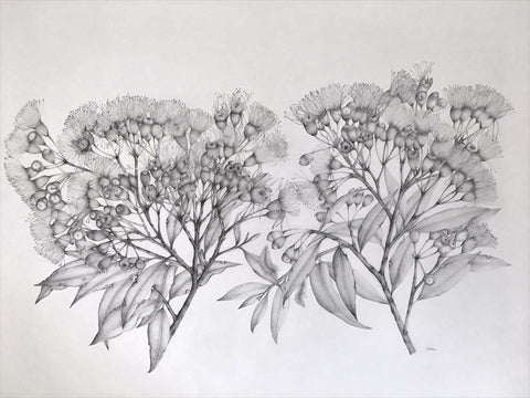 Highly detailed gray pencil drawing of two branches of flowers