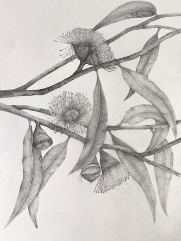 Gray pencil drawing of flowers on branches