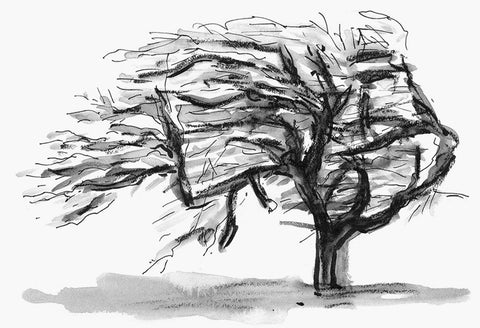 Black and white drawing with gray washes of tree seemly being blown by the wind on white background