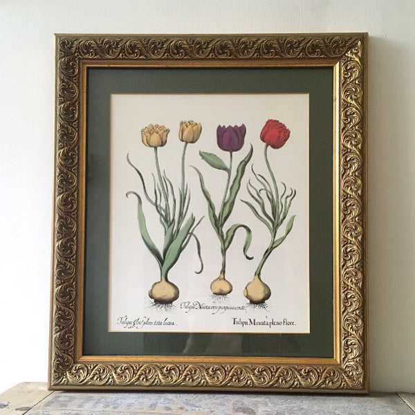 Framed Vintage Fun Botanical Wall Art (tulips)