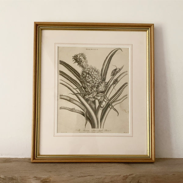 Vintage Framed Pineapple Picture