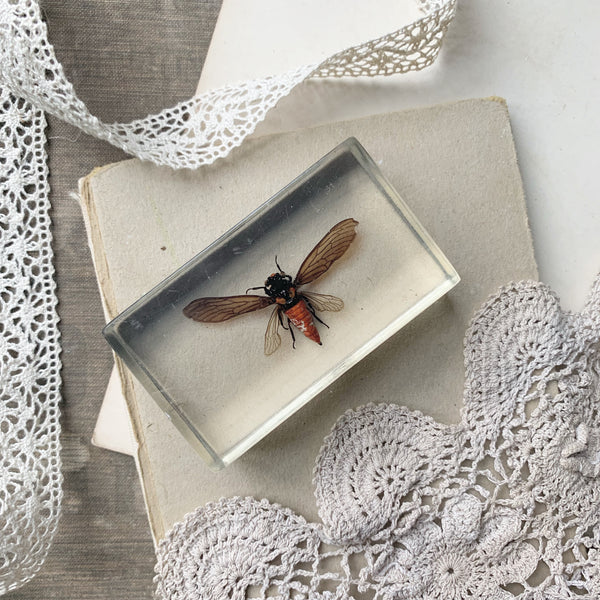 Vintage Resin Small Dragonfly