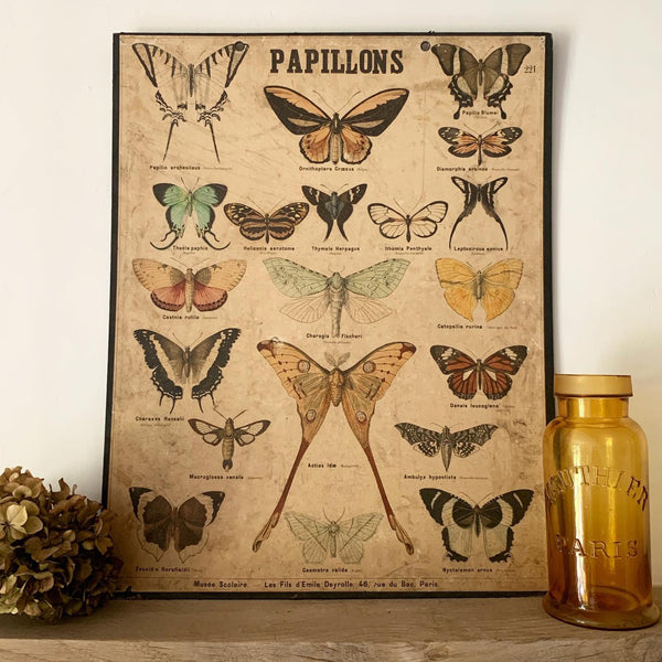 Papillons Vintage French Poster
