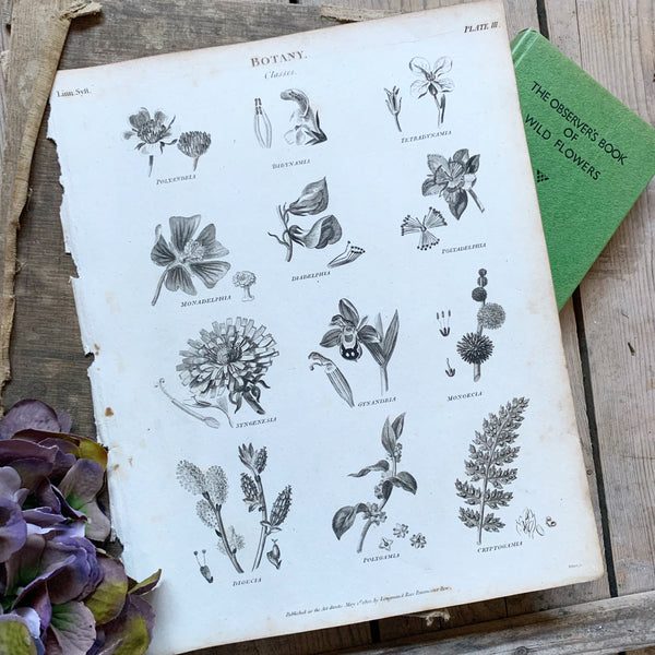 Victorian Botany Book Plate