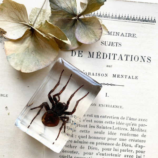 Resin Cast Spider