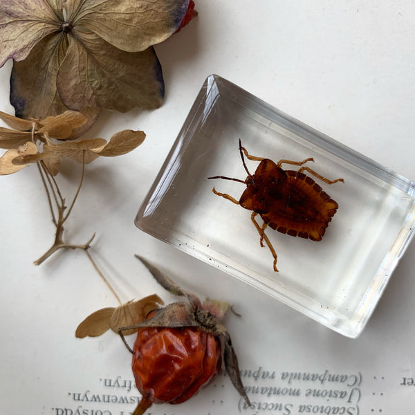 Resin Cast Beetle