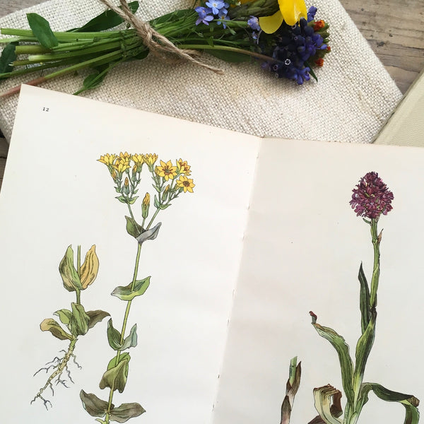 1940s Wild Flowers of the Chalk King Penguin