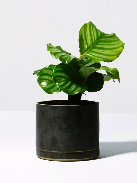 Black Planter Photo