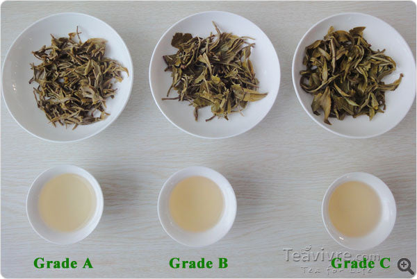 Choose Authentic Dongting Bi Luo Chun Green Tea