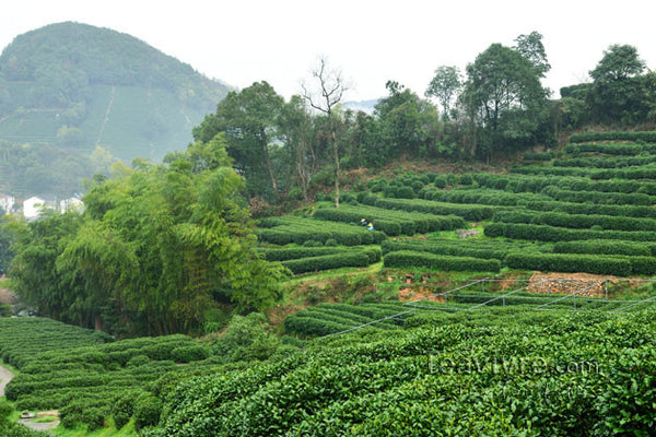 Shifeng Mountain – the Cradle of Famous Longjing Tea