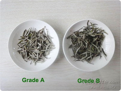 How To Choose The Best Silver Needle White Tea
