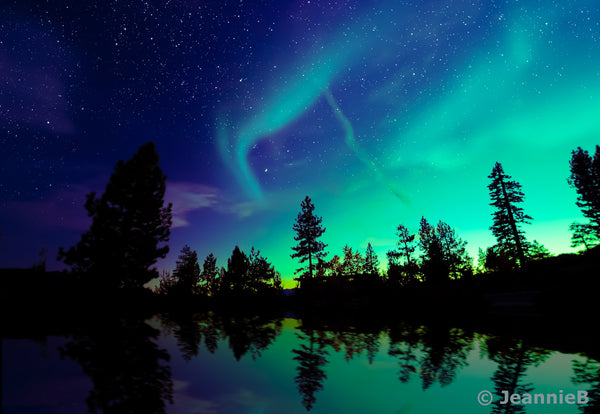 Northern Lights /W Trees