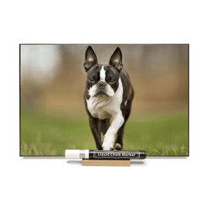"""Boston Terrier"" PHOTO CHALKBOARD Includes Chalkboard, Chalk Marker and Stand"