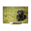 """Black Lab"" PHOTO CHALKBOARD Includes Chalkboard, Chalk Marker and Stand"