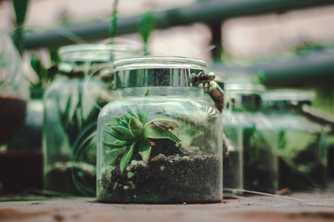Terrariums are fun | Yougotplanb