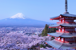 Cherry blossom season is coming! Book NOW before seats are SOLD OUT!!