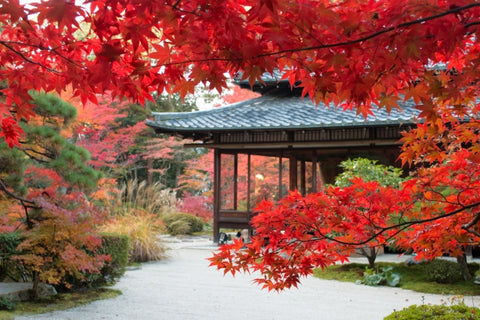 Kyoto in Autumn, Fall
