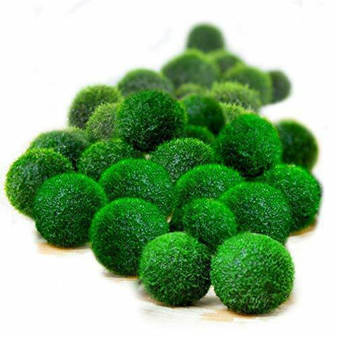 20 pcs Luffy Nano Marimo Moss Balls: Live Green plants for aquarium fishes