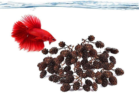 JOR Alder Cone Water Conditioner for Betta Fish, Creates Native Habitat, Relieves Stress, Serves As A Nursery and Food Source, Lowers Water pH, Can Be Used in Filter Or Freely in Aquarium, 60 pcs