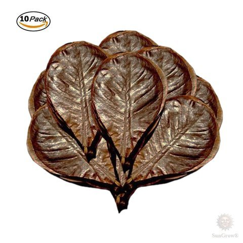 SunGrow Indian Almond Leaves for Betta, 8 Inches Long, Induce Breeding and Boost Immunity, Reduce Stress, No Toxic Chemicals Added, for Playing and Hiding, Easy to Use, 10 Pack