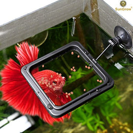 "4"" x 4"" Square Feeding Ring for Betta - Practical Floating Food Square held by Secure Suction Cup by SunGrow - Reduces Waste & Maintains Water Quality - Suitable for Flakes & other Floating Fish Foods"