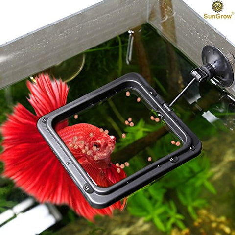 Betta Feeding Ring with Secure Suction Cup