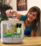 4 LUFFY Giant Marimo Moss Balls - Aesthetically Beautiful & Create Healthy Environment - Eco-Friendly, Low Maintenance & Curbs Algae Growth - Shrimps & Snails Love Them