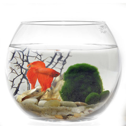 Borosilicate Glass Luffy Marimo Bowl