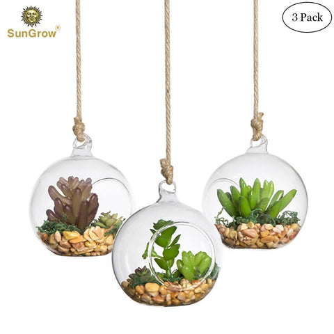 3 Hanging Glass Terrariums by SunGrow - Spherical Air Plant Orb