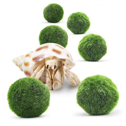 "Luffy 6 Hermit Balls - Bright, Green, All Natural Aquatic Plants - Round 0.6"" Nano Marimo Moss by SunGrow - for Freshwater and Saltwater Aquarium - Maintain Humidity - Supplement Hermit Crab Diets"