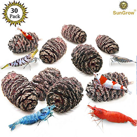 30 Naturally Grown, Pesticide-Free SunGrow Alder Cones for Shrimps