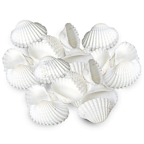 20 Pristine White Natural Aquarium Seashells