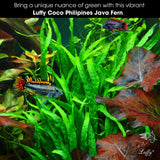 3pcs Luffy Java Fern for Betta Owners