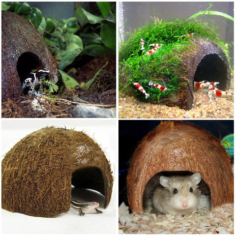 SunGrow Coco Hut for Aquatic Pets, 3x5 Inches, Made of Raw Coconut, Smooth Edges, Comfortable Hideout, Snag-Free Surface to Keep Fish, Snail and Other Pets Safe, Perfect for Breeding