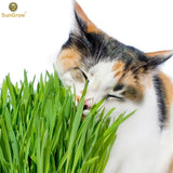 Cat Wheat Grass - Fresh Food for your pet