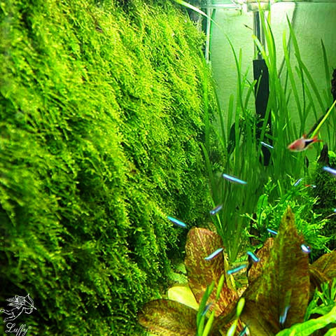 SunGrow Decorative Aquatic Moss Wall or Floor Mesh Kit, Moss Wall or Moss Carpet for Fish Tank (Plant Not Included), Includes 2 Mesh Pieces, 10 Cable Ties and 5 Suction Cups