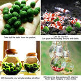 Luffy Nano Marimo Moss Balls: Live Green Plants for Fish Water tanks