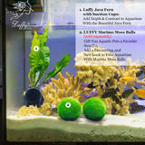 Luffy Philippine Java Fern Live Aquatic Plant with Suction Cup