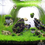 Magical hallelujah Floating Garden by SunGrow